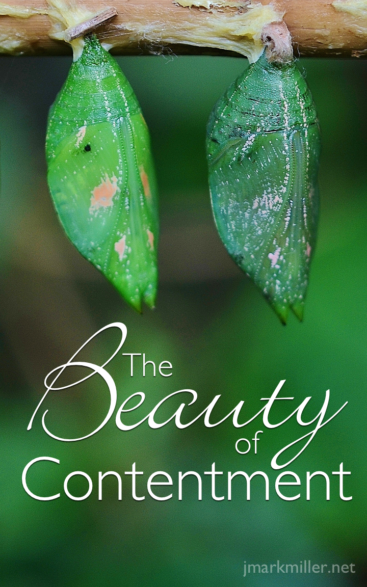 The Beauty of Contentment Pin The Beauty of Contentment